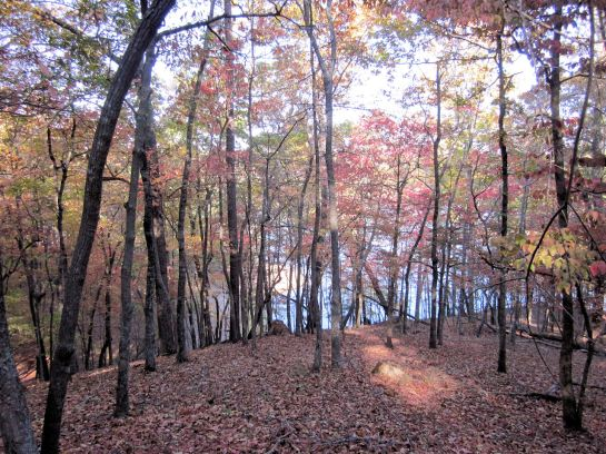 Fall Colors and Lake Allatoona at Red Top Mountain
